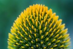 Ο εσωτερικός ενός λουλουδιού, κινηματογράφηση σε πρώτο πλάνο στοκ εικόνα