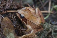 Ο ευκίνητος βάτραχος Στοκ εικόνα με δικαίωμα ελεύθερης χρήσης
