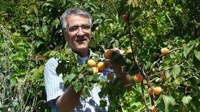 Ο ευτυχής αγρότης παρουσιάζει συγκομιδή απόθεμα βίντεο