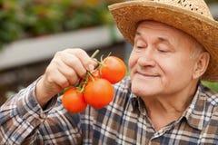 Ο εύθυμος παλαιός αγρότης φέρνει το φρέσκο λαχανικό Στοκ Εικόνες