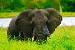 Ο ελέφαντας κοιτάζει επίμονα Στοκ Εικόνες