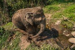Ο ελέφαντας παίρνει βρώμικος Στοκ Εικόνες
