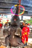 Ο ελέφαντας παρουσιάζει Ayutthaya, Ταϊλάνδη Στοκ Εικόνες
