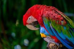 Ο ζωηρόχρωμος παπαγάλος Στοκ φωτογραφία με δικαίωμα ελεύθερης χρήσης