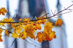 Ο ζωηρόχρωμος σφένδαμνος βγάζει φύλλα Στοκ Εικόνες