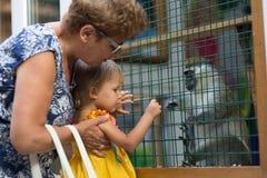 Ο ζωολογικός κήπος επαφών, γιαγιά με τα εγγόνια εξετάζει τα ζώα στοκ εικόνα