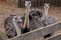 Ο ζωολογικός κήπος τα σιού φθινόπωρα, νότια Ντακότα είναι μια οικογενειακή φιλική έλξη για πολύ καιρό όλες Στοκ εικόνα με δικαίωμα ελεύθερης χρήσης