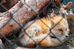 Ο ζωολογικός κήπος τα σιού φθινόπωρα, νότια Ντακότα είναι μια οικογενειακή φιλική έλξη για πολύ καιρό όλες Στοκ εικόνες με δικαίωμα ελεύθερης χρήσης