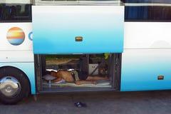 Οδηγός λεωφορείου στον ύπνο της Τουρκίας Στοκ εικόνες με δικαίωμα ελεύθερης χρήσης