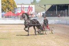 Οδηγός σε ένα horse-drawn κάρρο Στοκ Εικόνες