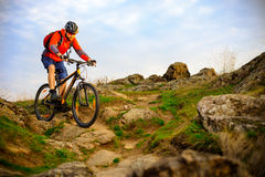 Οδηγώντας ποδήλατο βουνών ποδηλατών στο όμορφο δύσκολο ίχνος ανοίξεων Ακραία αθλητική έννοια Στοκ Φωτογραφία