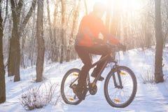 Οδηγώντας ποδήλατο ποδηλατών βουνών στο χιονώδες ίχνος στο όμορφο χειμερινό δασικό LIT από τον ήλιο Στοκ Εικόνα