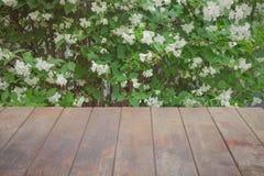Ο ηλικίας ξύλινος πίνακας ελεύθερου χώρου στο υπόβαθρο φρέσκο jasmine ανθίζει στο θάμνο στοκ φωτογραφία με δικαίωμα ελεύθερης χρήσης