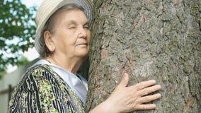 Ο ηλικιωμένος κορμός δέντρων αγκαλιάσματος αυτή παραδίδει το δάσος απόθεμα βίντεο