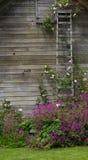 ο θάμνος που αναρριχείτα&i Στοκ εικόνες με δικαίωμα ελεύθερης χρήσης