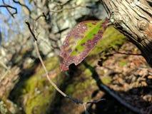 Ο θάνατος ενός φύλλου Στοκ εικόνα με δικαίωμα ελεύθερης χρήσης