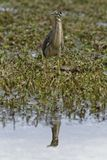 Ο θαυμάσιος κόσμος των πουλιών στοκ εικόνες