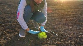 Ο θηλυκός αγρότης βάζει ένα πρωτότυπο σποροφύτων στο έδαφος φιλμ μικρού μήκους