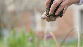Ο θηλυκός κηπουρός χεριών που ψεκάζει το λίπασμα ανθίζει το σπορόφυτο και τη φύτευση στο έδαφος κοντά επάνω απόθεμα βίντεο