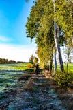 Ο θηλυκός περιπατητής δένει την πορεία περιπάτων τοπίων με τα δέντρα σημύδων στοκ φωτογραφίες με δικαίωμα ελεύθερης χρήσης