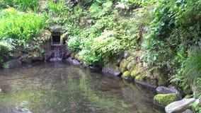 Ο ιαπωνικός βοτανικός κήπος zen με τα κόκκινα και πράσινα φύλλα με το νερό λειώνει από το χιόνι απόθεμα βίντεο