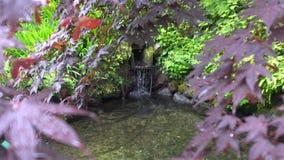 Ο ιαπωνικός βοτανικός κήπος zen με τα κόκκινα και πράσινα φύλλα με το νερό λειώνει από το χιόνι φιλμ μικρού μήκους