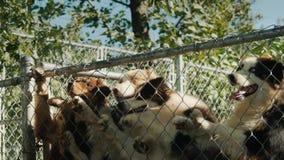 Ο ιδιοκτήτης δίνει τα μικρά κομμάτια των εύγευστων τροφίμων στα σκυλιά του, άλματα κατοικίδιων ζώων υψηλά για να αρπάξει τα τρόφι φιλμ μικρού μήκους