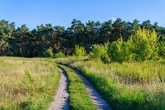 οδικά δάση αλσών σημύδων Στοκ φωτογραφία με δικαίωμα ελεύθερης χρήσης