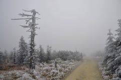 οδικά δέντρα κάτω από το χει Στοκ φωτογραφία με δικαίωμα ελεύθερης χρήσης