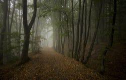 Οδική γούρνα το σκοτεινό δάσος Στοκ εικόνα με δικαίωμα ελεύθερης χρήσης