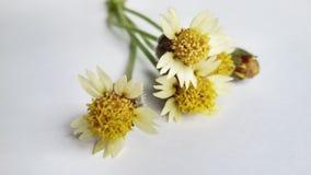 οδικό δευτερεύον λουλούδι Στοκ Εικόνες