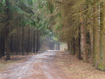 Οδικό την άνοιξη δάσος Στοκ Εικόνα