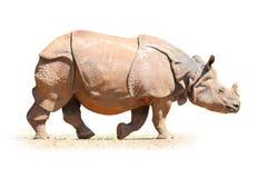Ο ινδικός ρινόκερος Στοκ Εικόνα