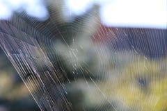 Ο Ιστός αραχνών, ιστός αράχνης Στοκ εικόνες με δικαίωμα ελεύθερης χρήσης