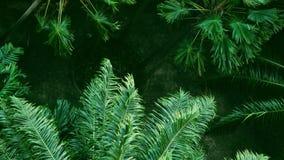 Ο ισχυρός άνεμος ή ο βαρύς αέρας κάμπτει το δέντρο, υψηλή άποψη γωνίας πλήρες HD σε αργή κίνηση φιλμ μικρού μήκους