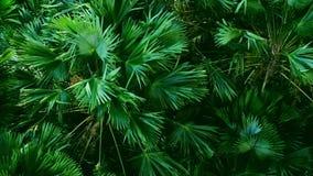 Ο ισχυρός άνεμος ή ο βαρύς αέρας κάμπτει το δέντρο, υψηλή άποψη γωνίας πλήρες HD σε αργή κίνηση απόθεμα βίντεο