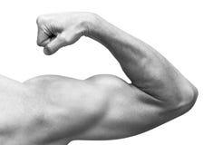 Ο ισχυρός αρσενικός βραχίονας παρουσιάζει δικέφαλους μυς Κινηματογράφηση σε πρώτο πλάνο γραπτή Στοκ εικόνες με δικαίωμα ελεύθερης χρήσης