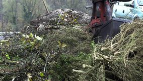 Ο κάδος εκσκαφέων ανυψώνει τα πριονισμένα δέντρα απόθεμα βίντεο
