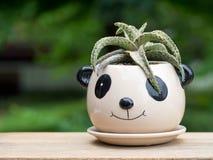 Ο κάκτος είναι σε ένα δοχείο panda Τεθειμένος σε ένα ξύλινο επιτραπέζιο πράσινο σκηνικό των δέντρων Στοκ εικόνα με δικαίωμα ελεύθερης χρήσης