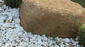 Ο κάκτος και οι βράχοι απόθεμα βίντεο