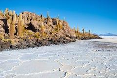 Ο κάκτος στο νησί Incahuasi, αλατίζει επίπεδο Salar de Uyuni, Altiplano στοκ φωτογραφίες με δικαίωμα ελεύθερης χρήσης