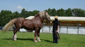 Ο κάουμποϋ παρουσιάζει βαρύ άλογο απόθεμα βίντεο