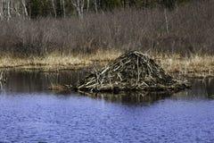 Ο κάστορας κατοικεί Στοκ φωτογραφίες με δικαίωμα ελεύθερης χρήσης
