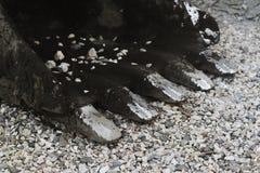 Ο κάδος εκσκαφέων είναι στους βράχους Στοκ φωτογραφία με δικαίωμα ελεύθερης χρήσης