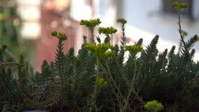 Ο κήπος ανθίζει flowerpot, ηλιόλουστη ημέρα, ήρεμο αγαθό σκηνής για την περισυλλογή φιλμ μικρού μήκους