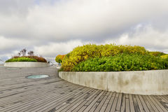 Ο κήπος βρίσκεται στη στέγη ενός ουρανοξύστη Στοκ Εικόνες
