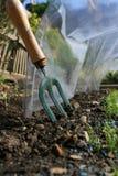 ο κήπος δικράνων ανοίγει polly Στοκ φωτογραφία με δικαίωμα ελεύθερης χρήσης