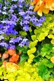ο κήπος εξοχικών σπιτιών ανθίζει το υπόβαθρο Στοκ εικόνα με δικαίωμα ελεύθερης χρήσης