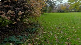 Ο κήπος επαρχίας το φθινόπωρο, τον κηφήνα που πετούν επάνω από τη χλόη, την αποφυγή των θάμνων και το ανακάτωμα πεσμένος επάνω βγ απόθεμα βίντεο