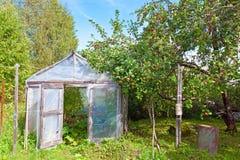 ο κήπος μήλων οι ντομάτες Στοκ εικόνα με δικαίωμα ελεύθερης χρήσης